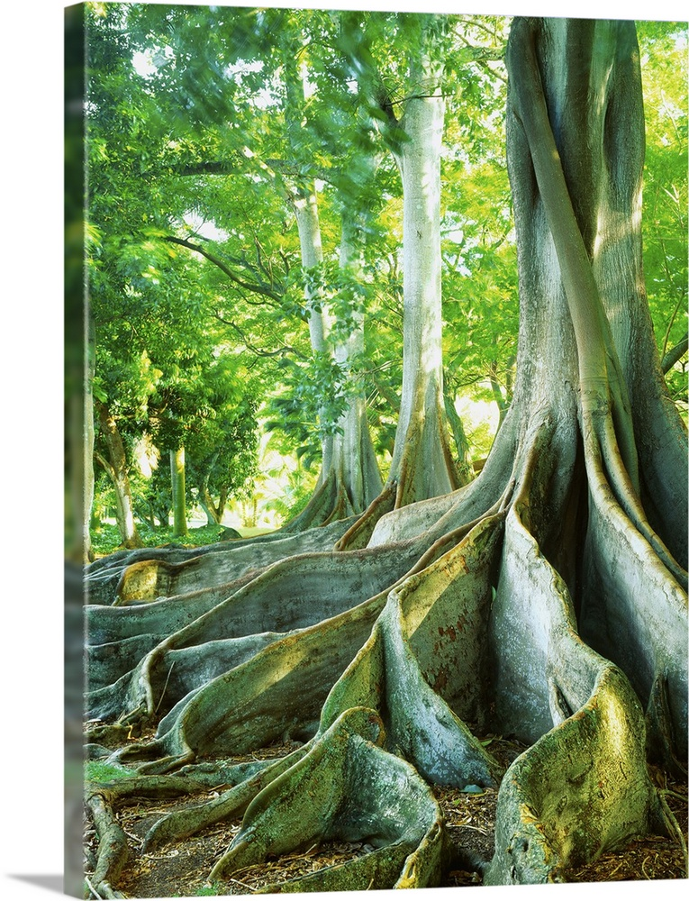United States Hawaii Kauai island Poipu Allerton Garden giant