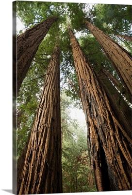 USA, California, Muir Woods National Monument