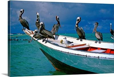 Venezuela, Los Roques, Los Roques National Park, Gran Roque island, pelicans