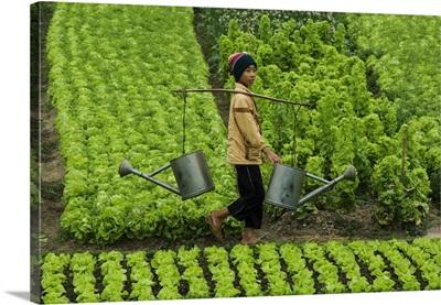 Vietnam, Coast, Haipong, Southeast Asia, Boy that sprinkles the garden