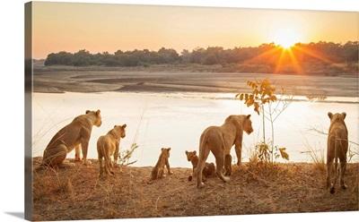 Zambia, South Luangwa National Park