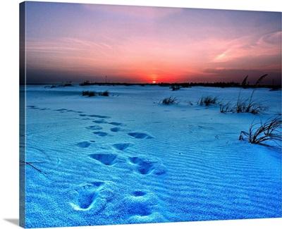 Blue Purple Sunset Landscape