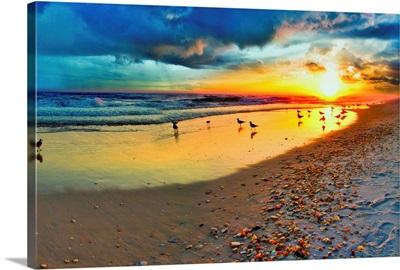 Blue Sunset Landscape Beach Shells Birds