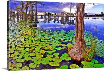 Cypress Tree Swamp Sunset Landscape