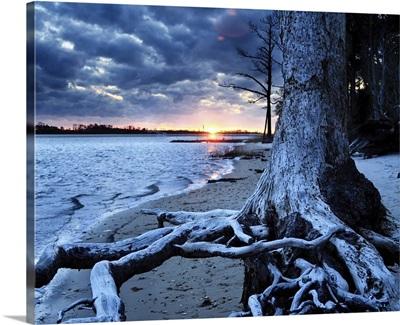 Dark Sunset Lake Tree Landscape