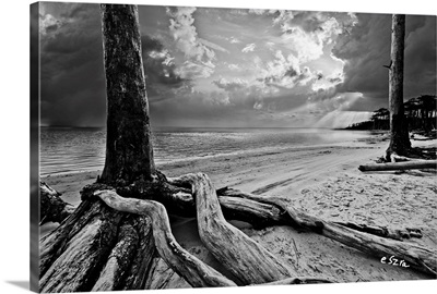 Exposed Tree Roots-Black And White Sunrays Sunset