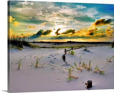 Gold Sunset Beach Sand Dunes