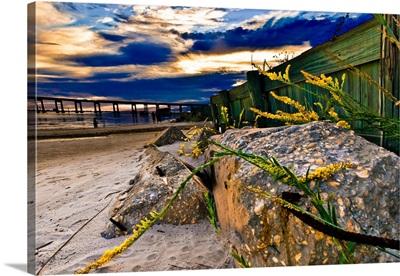 Golden-Rod-Sunset-Yellow-Wildflower-Green-Blue