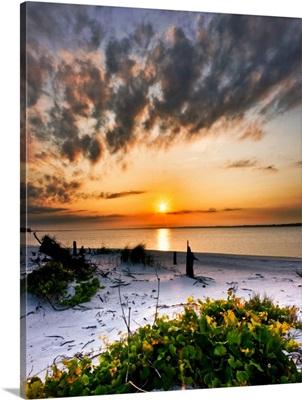 Green Grape Vines Orange Sunset Beach