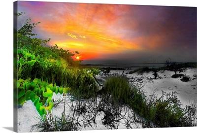 Green Vine Landscape Red Sunset-Selective Color
