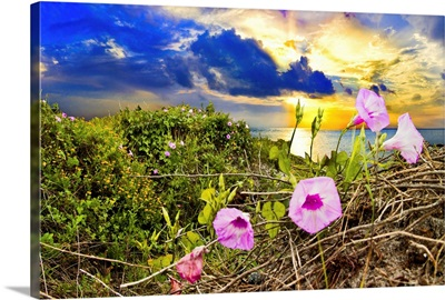 Morning Glory Sunrise-Purple Wildflower Landscape