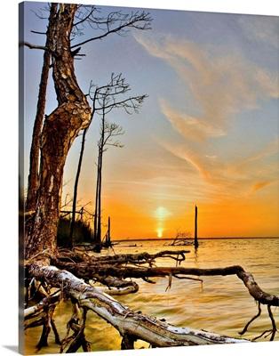 Orange Lake Sunset Reflection Tree Roots