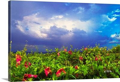 Purple Morning Glory Green Vine Landscape Blue Sky