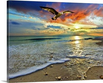 Red Sunset Green Sea Hawk Florida Beach