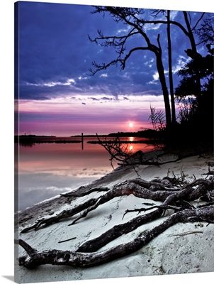 River-Sunset-Sandy-Bank-Exposed-Forest-Roots
