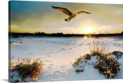 Sea Hawk Soars Yellow Beach Sun Flowers
