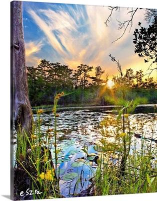 Swamp Sunset Yellow Flowers Lilypad Reflection