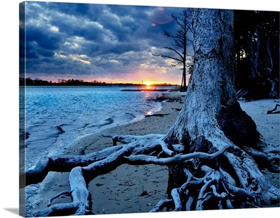 Weathered Tree Roots Blue Sunset-Inspirational