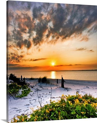Wild Grape Landscape Orange Beach Sunset