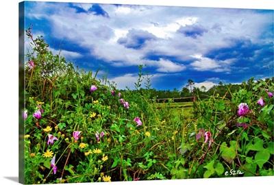 Wildflower Landscape-Morning Glory Dandelion-Rain