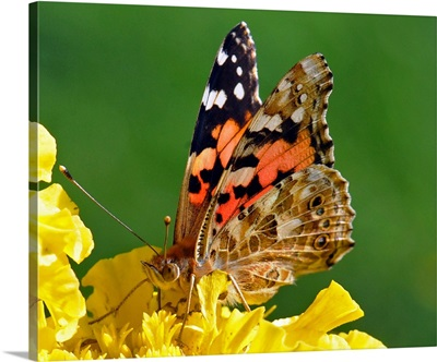 A Butterfly Sitting On Flower