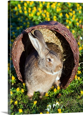 A Rabbit Sits In Basket On Blooming Meadow Around Easter Time