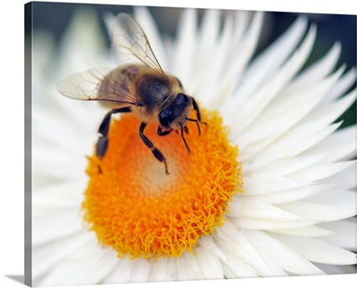 A Young Bee Sitting On Flower