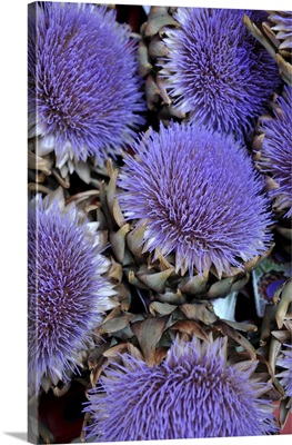 Artichokes That Have Flowered At Supermarket In Munich, Germany