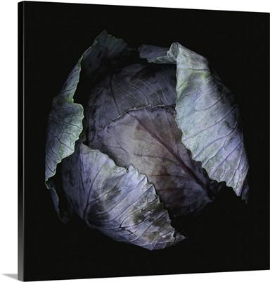 Close-Up Of Purple Cabbage