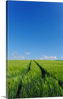 Cornfields Against Blue Sky