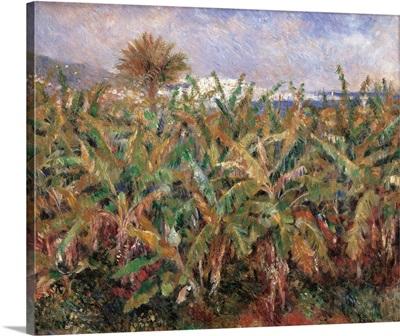 Field of Banana Trees, by Pierre-Auguste Renoir, 1881. Musee d'Orsay, Paris, France