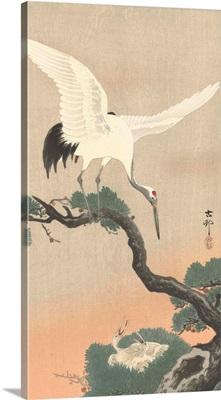 Japanese Crane on Pine Branch, by Ohara Koson, 1900-30
