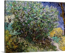 Lilac Bush. 1889. By Vincent Van Gogh. Hermitage Museum, St. Petersburg, Russia