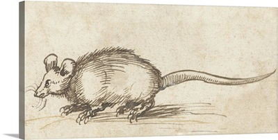 Mouse, by Albrecht Durer, c. 1480-1520, German drawing, pen and ink on paper