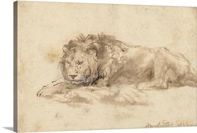 Reclining Lion, by Rembrandt van Rijn, c. 1650-59