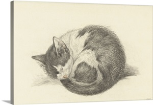 Sleeping Cat Rolled Into A Ball By Jean Bernard 1825