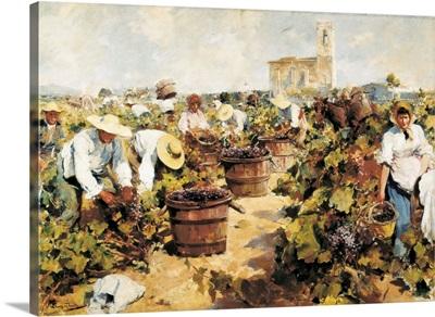 The Grape Harvest. Arcadi Mas i Fondevila