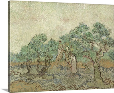 The Olive Orchard, by Vincent van Gogh, 1889