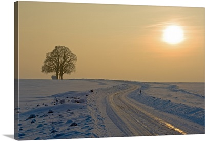 The Setting Sun On Snowy Road With Tree In Background