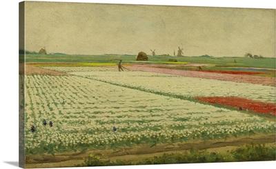 Tulpenvelden, c. 1890-1922, Dutch painting, oil on panel