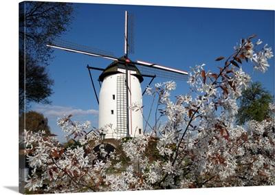 Windmill In Walbeck, Germany