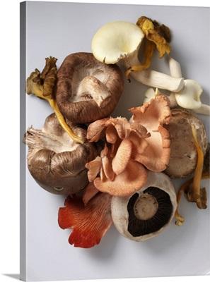 Mushrooms selection, Shitaki, pink oyster, chantarelle, field yellow foot