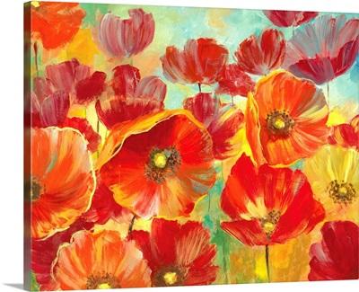 A Poppy Garden