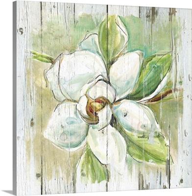Country Magnolia