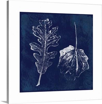 Cyanotype Oak Leaves