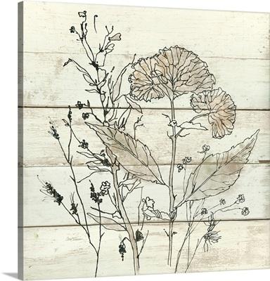 Dried Flower Study I