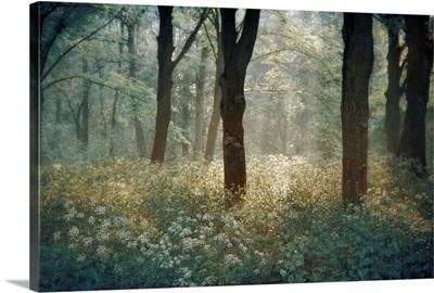 Forest de Tenom