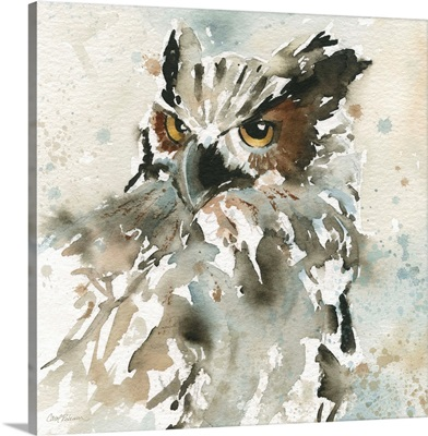 I Spy With My Owl's Eyes