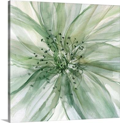 Macro Sage Flower II