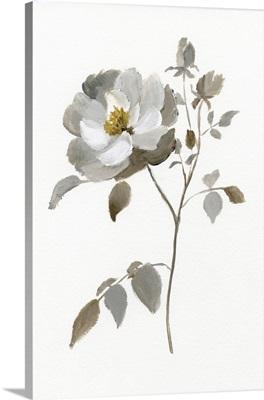 Neutral Rose II